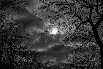 Fototapeta Drzewa i chmury obraz