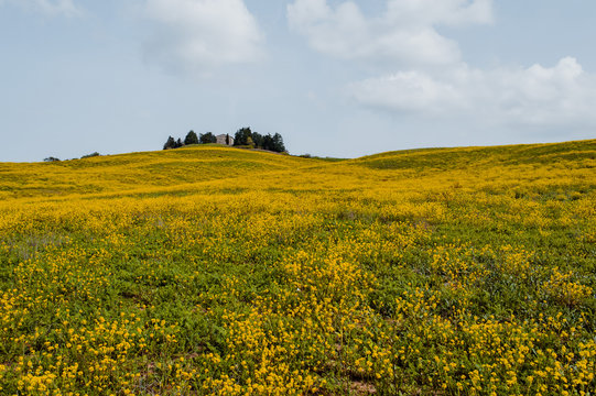 Flower Field in front of a small countryside house
