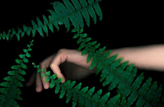 Female hand and fern leaves