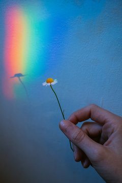 touched by the rainbow