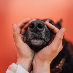 close up of a dog nose with human hands around it