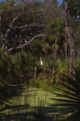 South Carolina Heron