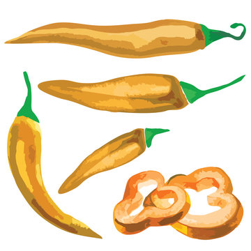 Watercolor vector illustrated paprika, yellow pepper