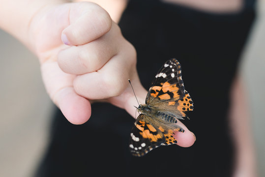 Butterfly on the finger