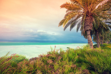Fototapete - Palm trees on the beach of the Dead Sea. Dead Sea Coast with Tropical Plants. Tropical nature landscape