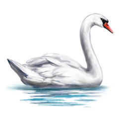 Tuinposter Zwaan white Swan bird on the pond, art illustration painted with watercolors isolated on white background