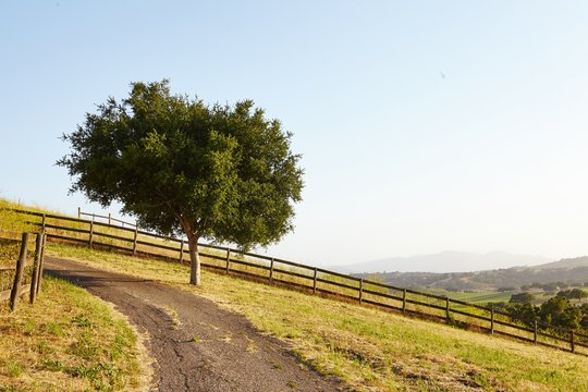 Tree by Dirt Road