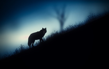 wolf in the mountains at dusk