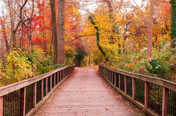 Fotobehang Weg in bos Beautiful wooden pathway going through a breathtaking colorful forest