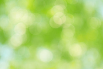 Foto op Canvas Lente Beautiful green bokeh of tree leaves nature out of focus background