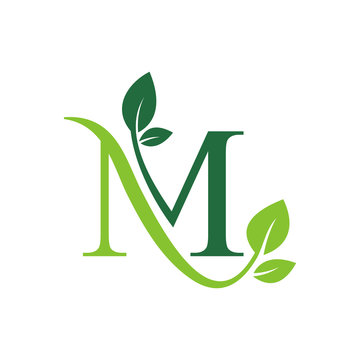 Initial Letter M With Leaf Luxury Logo. Green leaf logo Template vector Design.