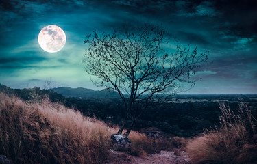 Wall Mural - Beautiful bright full moon above wilderness area in forest. Serenity nature background.