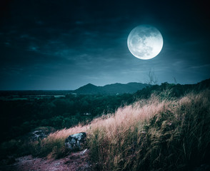 Fototapete - Beautiful bright full moon above wilderness area in forest. Serenity nature background.