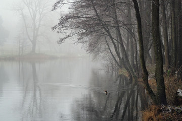 Keuken foto achterwand Bos in mist Misty winter morning on the river. The beginning of winter and fog.