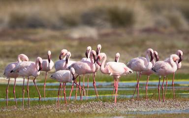 In de dag Flamingo group of flamingos wild in nature