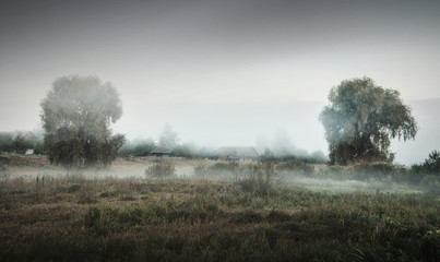 Photo sur Toile Gris Dramatic rural landscape with fog