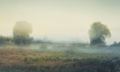 Photo sur Aluminium Beige rural landscape with fog in the style of paintings by Ivan Shishkin