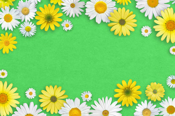 Keuken foto achterwand Lieveheersbeestjes White and yellow daisy flowers on green paper background. Beautiful spring composition, template for design, with copy space for text.
