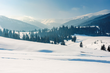 mountainous landscape in wintertime. stunning rural scenery on a bright sunny day. spruce forest on snow covered rolling hills. beautiful scenery of borzhava ridge