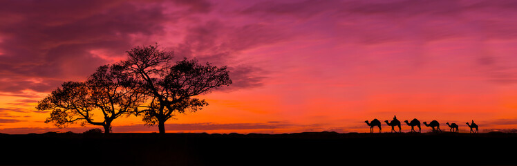 Amazing sunset and sunrise.Panorama silhouette tree in africa with sunset.Tree silhouetted against a setting sun.Dark tree on open field dramatic sunrise.Safari theme.Giraffes , Lion , Rhino.