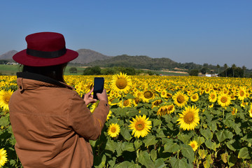 woman using a smartphone to take pictures of sunflower
