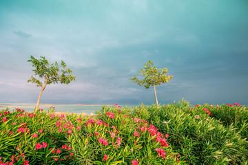 Fototapete - Tropical nature landscape. Seashore with tropical plants