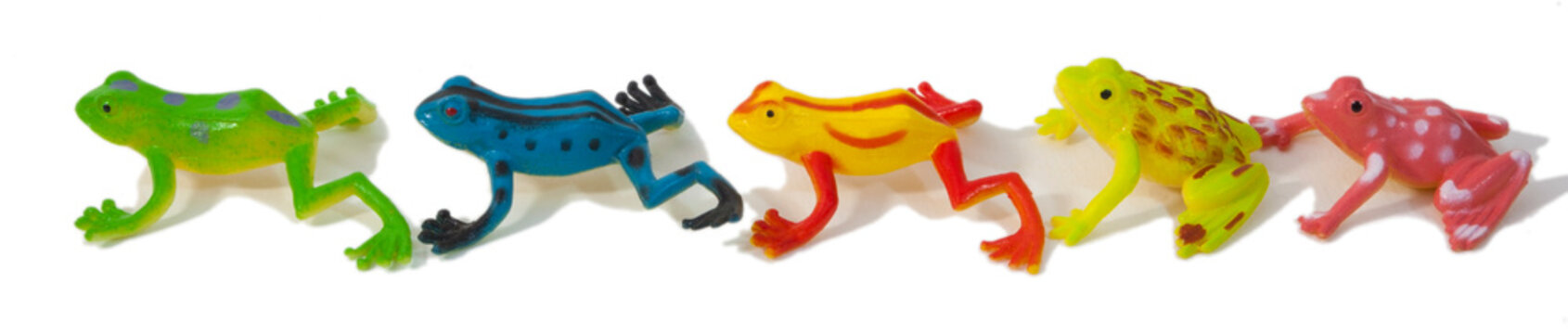 Colorful and exceptionally cute exotic rainforest inspired frogs.