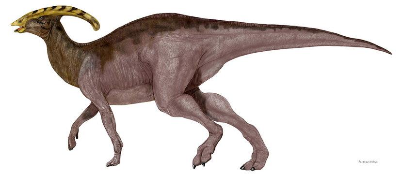 パラサウロロフス 白亜紀後期のハドロサウルスの仲間。同時期の他のカモノハシ竜であったランベオサウルスやコリトサウルスと同じく大型の植物食に特化した恐竜。最大の特徴は頭頂にある長い鶏冠である。その鶏冠に管があり、嗅覚を高めるものであるとか、この管の構造上トロンボーンのように音を出し、コミュニケーションのために使用する役割を持っていたという説がある。