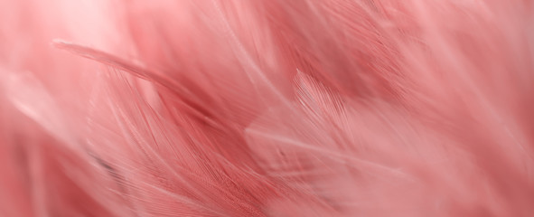 Stores à enrouleur Flamingo Image nature art of wings bird,Soft pastel detail of design,chicken feather texture,white fluffy twirled on transparent background wallpaper Abstract. Coral Pink color trends and vintage.