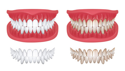 Realistic teeth. Isolated white 3D smile for orthodontics clinic, dentistry concept with white jaw render. Vector oral hygiene teeth model for denture or beauty smile illustration Fototapete