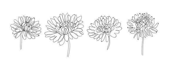 Continuous Line Drawing Set Of Plants Black and White Sketch of Flowers Isolated on White Background. Flowers One Line Illustration. Vector EPS 10.