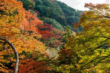 秋・箕面の紅葉