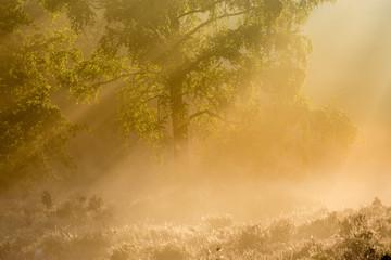 Keuken foto achterwand Bos in mist Heideveld Beisbroek Brugge