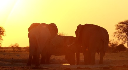 Deurstickers Rood paars Here in the photo we see very beautiful elephants and they have a good time outdoors.
