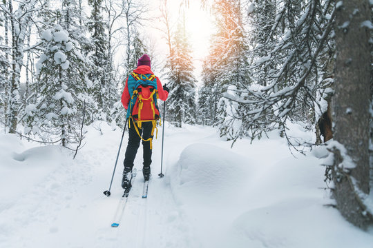 ski touring - woman with skis on a snowy winter forest trail. Yllas, Lapland, Finland