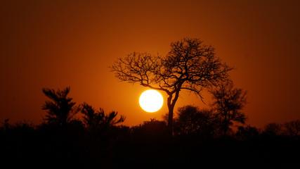 Recess Fitting Magenta Baum vor untergehender Sonne