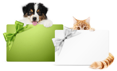 Fotomurales - pet store gift card, puppy dog and kitten cat together isolated on white background, for promotional discounts and wishes a Merry Christmas