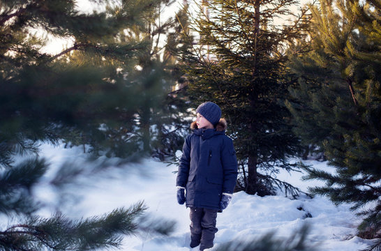 A boy in warm clothes in the coniferous forest in winter.
