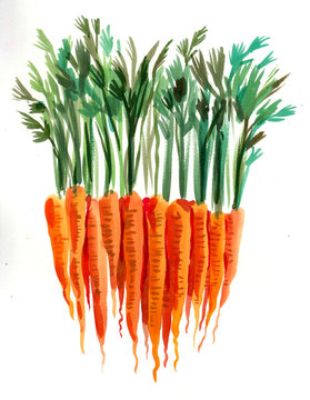 Bunch of ripe carrots. Watercolor painting