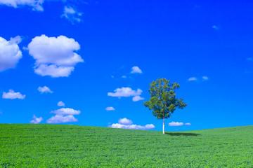 Foto auf Leinwand Dunkelblau 草原と白樺の木と青空