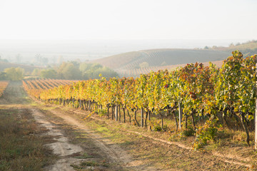 Fotobehang Wijngaard Beautiful landscape of Vineyards in Tuscany. Chianti region in summer season. Italy.