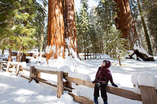 kid in sequoia national park