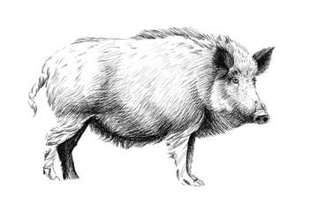 Hand drawn wild boar, sketch graphics monochrome illustration Wall mural