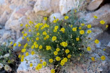 Las flores de las montañas