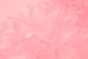 Photo sur Aluminium Roses Beautiful abstract color white and pink flowers on white background and white flower frame and orange leaves background texture, flowers banner