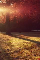 Foto auf AluDibond Kastanienbraun Herbstbaum