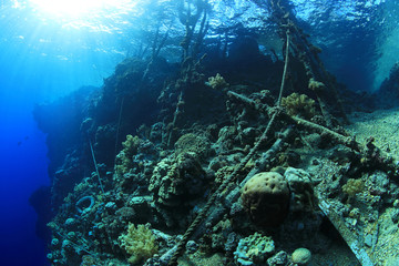 Wall Mural - Marine pollution on corals