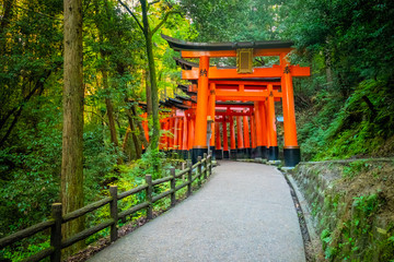 Spoed Fotobehang Kyoto Japan. Kyoto. The orange gates of Fushimi Inari Shrine. Fushimi Inari Taisha Temple. The mountain of Inariyama in Japan. Entrance to the torii Shinto temple in Kyoto. Orange gate among the trees.