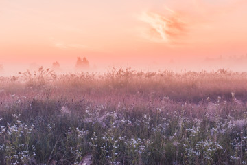 Stores à enrouleur Pres, Marais summer sunrise field of blooming pink meadow flowers