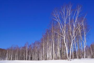 Fototapeten Dunkelblau winter landscape with trees and blue sky